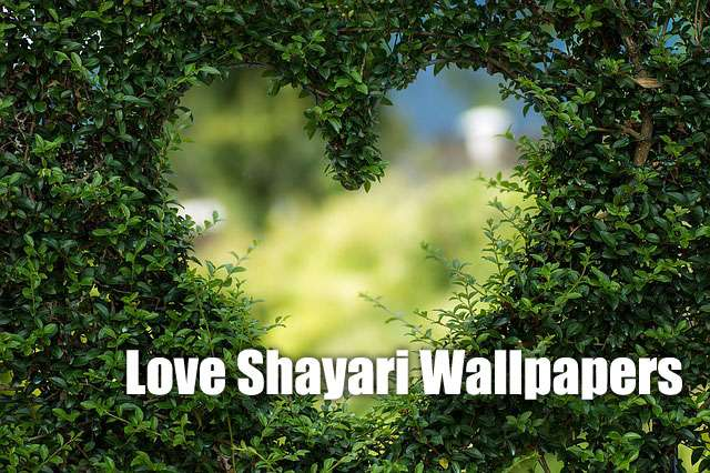 best 5 love shayari wallpapers