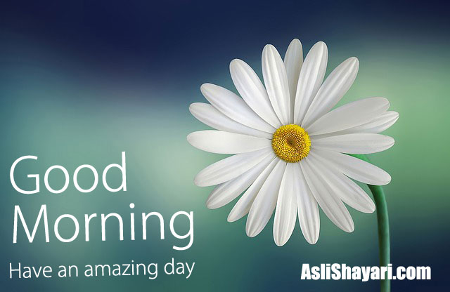 good morning 13