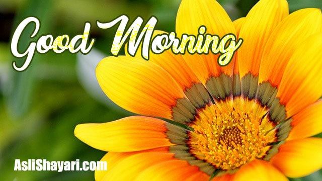 good morning 14