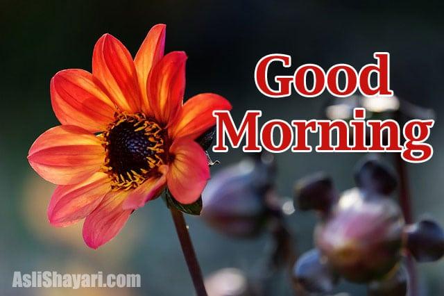 good morning 19