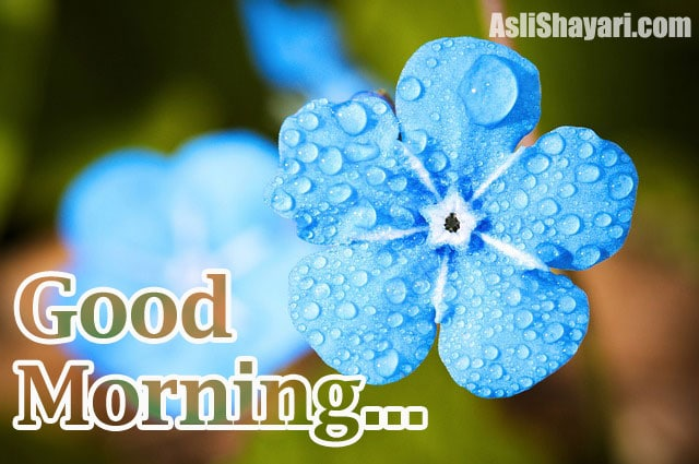good morning photo 20